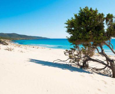 beach_filmmakerchannel